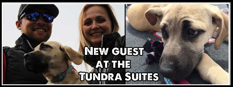 A New Guest at the Tundra Suites