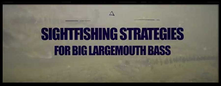 Sight Fishing Strategies for Big Largemouth Bass