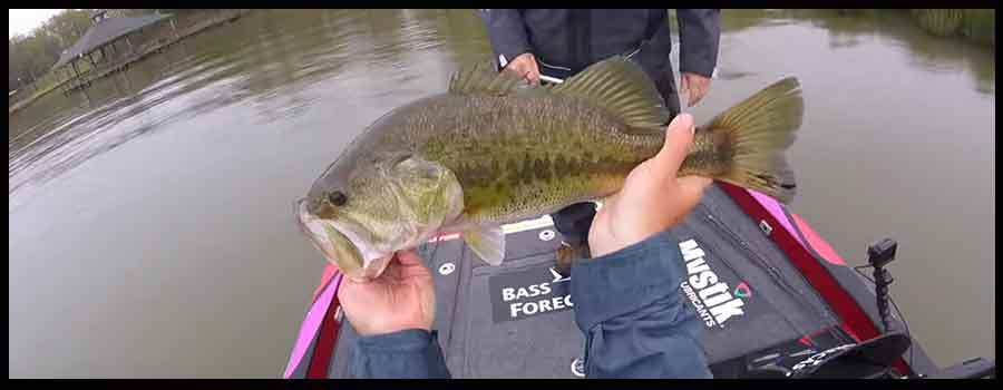 Bass Fishing Information Tips And More