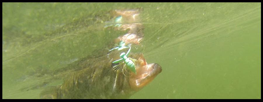 New Ever Green Bait Promises Topwater Mayhem