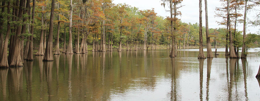 B.A.S.S. Nation Championship Returns To Louisiana's Ouachita River
